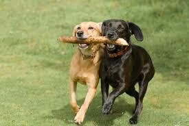dogsexercising