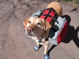 dogsbackpacks